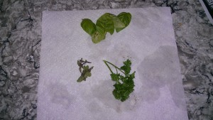 Fresh basil, and oregano from my garden, and store bought parsley