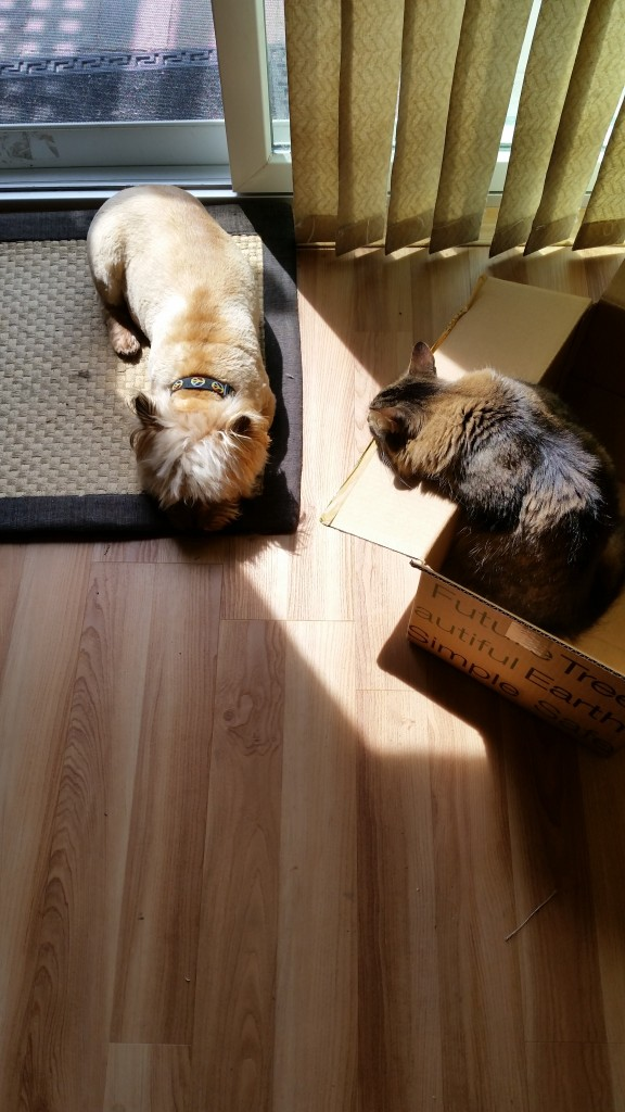 bailey and emmitt in the sun